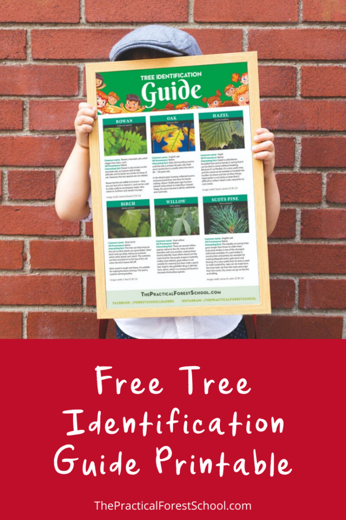 free tree identification guide printable