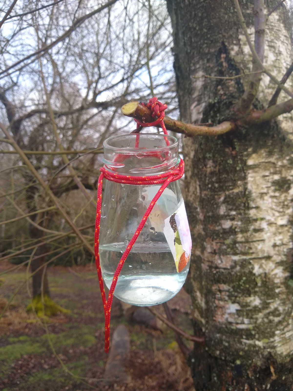 Jar for collecting birch sap